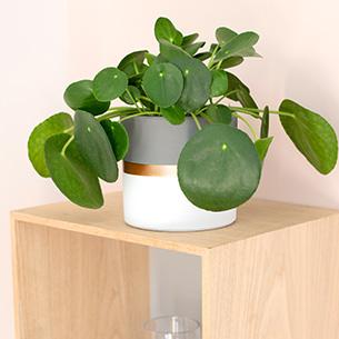 Comment Se Debarrasser Moucherons Plantes Vertes Interflora