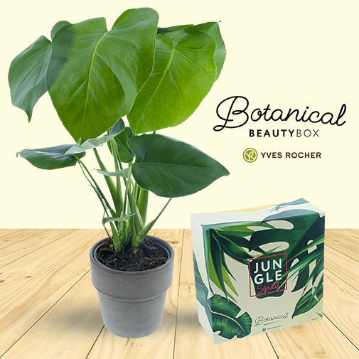 "Fleurs et cadeaux Philo monstera & sa Botanical Beauty Box ""Jungle Spirit"" by Yves Rocher"