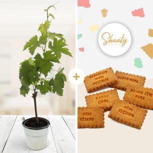 Fleurs et cadeaux Pied de vigne et ses biscuits apéritifs personnalisés Fête des Pères