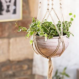 Plante verte suspendue - interflora