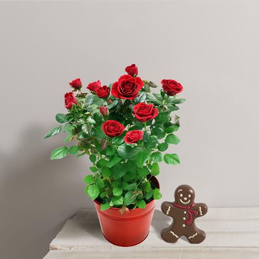 Fleurs et cadeaux Rosier de Noël et son bonhomme en chocolat