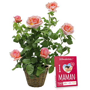 Rosier en pot et son coffret Wonderbox <br> I Love Maman - interflora