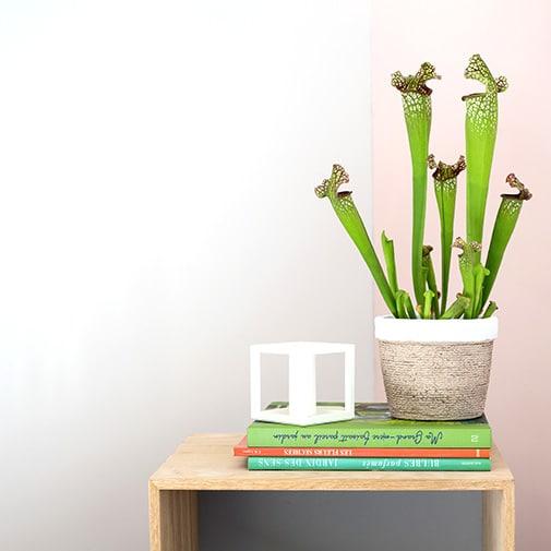 Plantes vertes et fleuries Sarracenia + cache pot
