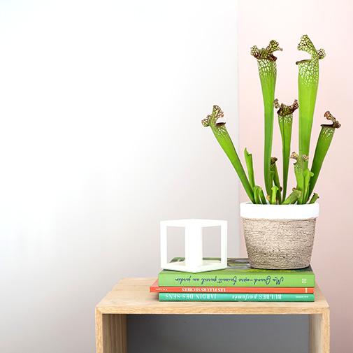 Plantes vertes et fleuries Sarracenia