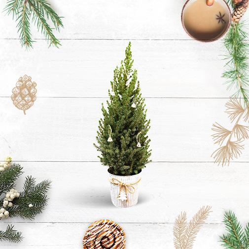Plantes vertes et fleuries Sapin vert et sa décoration de Noël