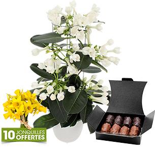 Fleurs et cadeaux Stéphanotis et son ballotin de chocolats