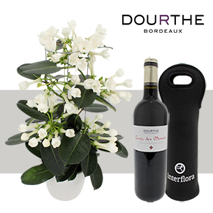 Stephanotis et son Saint Emilion - interflora
