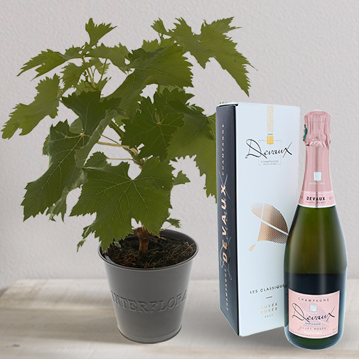 Fleurs et cadeaux Pied de vigne & son champagne Devaux rosé