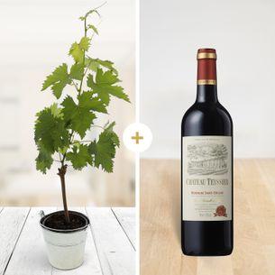 Fleurs et cadeaux Pied de vigne & son Château Teyssier 2014