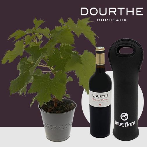 Fleurs et cadeaux Pied de vigne & son St Emilion Dourthe