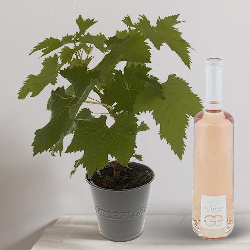 """Fleurs et cadeaux Pied de vigne & son rosé """"Les Terrasses du Perret"""""""