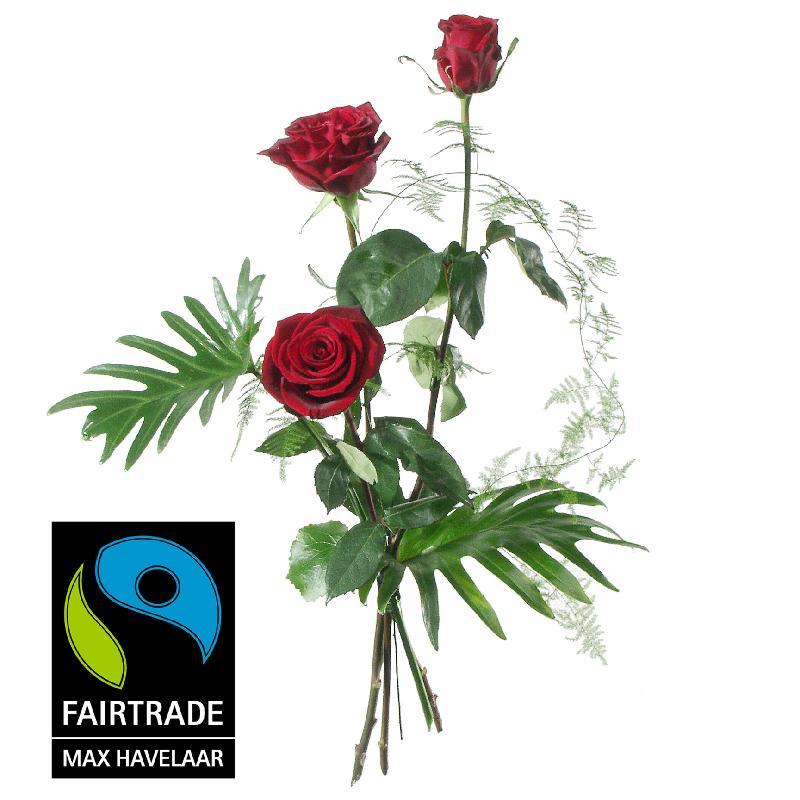 3 Red Fairtrade Max Havelaar-Roses, medium stem with greener