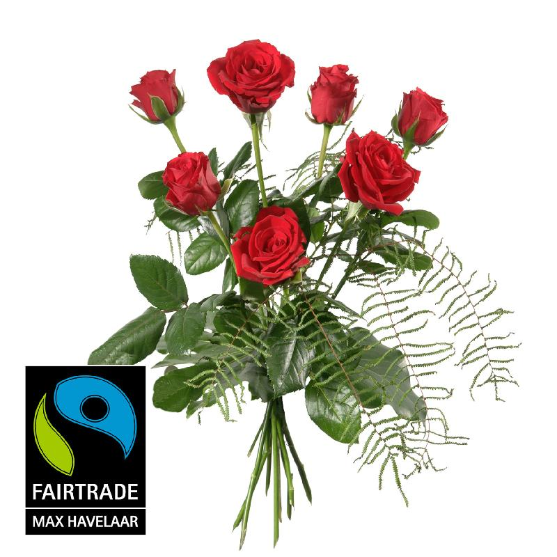 7 Red Fairtrade Max Havelaar-Roses, shortstemmed with greene