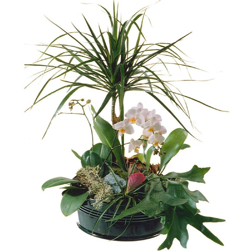 Elegant Plant Arrangement
