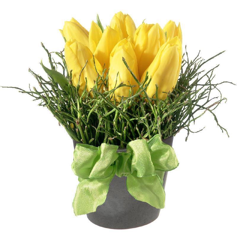 Spring-Hit (arrangement)
