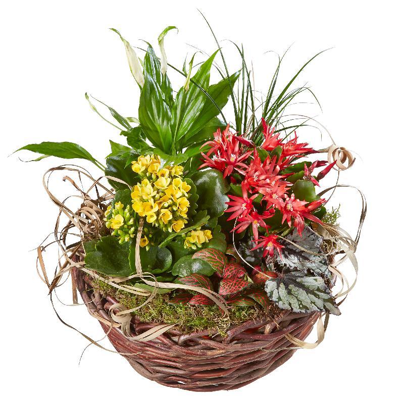Bright Indoor Plants in a Basket
