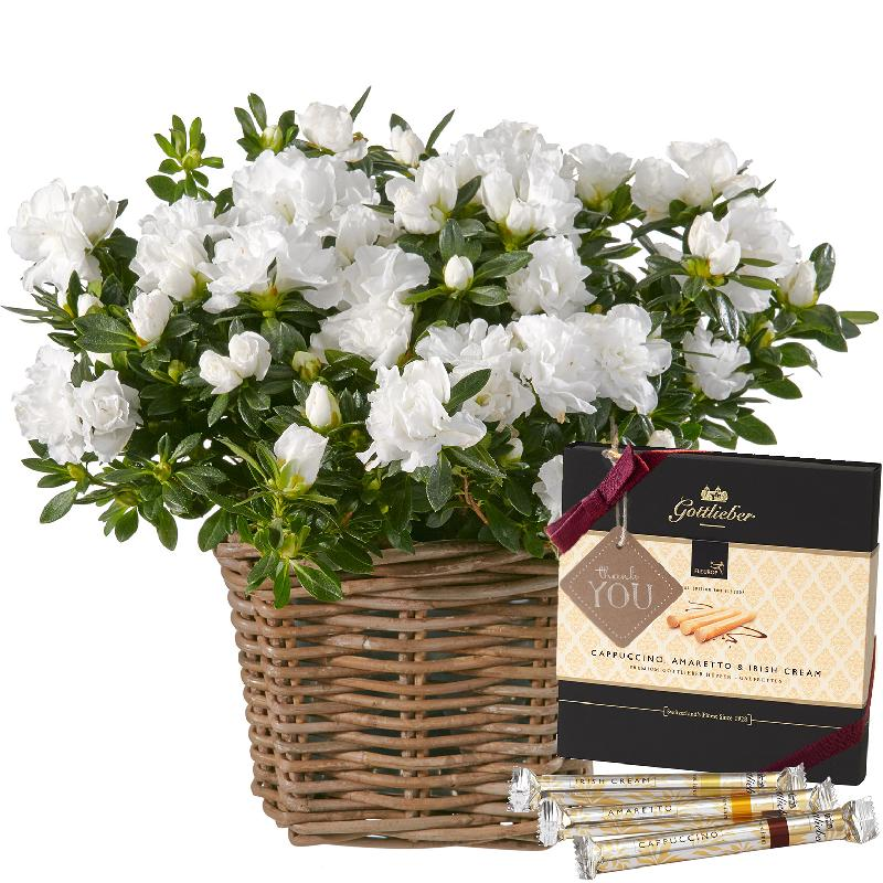 Azalea (white) with Gottlieber Hüppen and hanging gift tag «