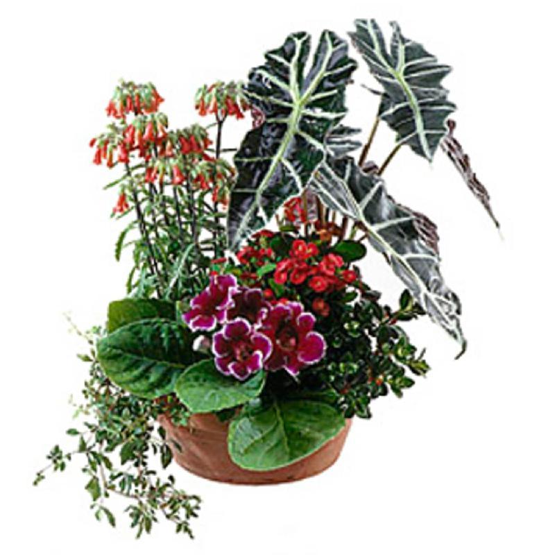 Bouquet de fleurs Arrangement of Plants for Indoor