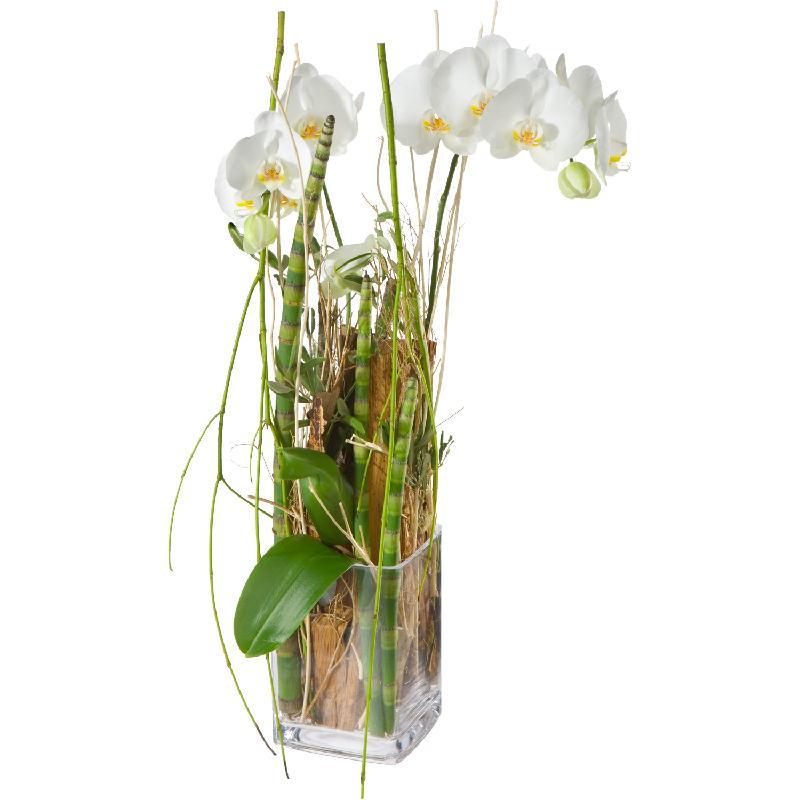 Bouquet de fleurs Enchantment (orchid plant incl. vase)