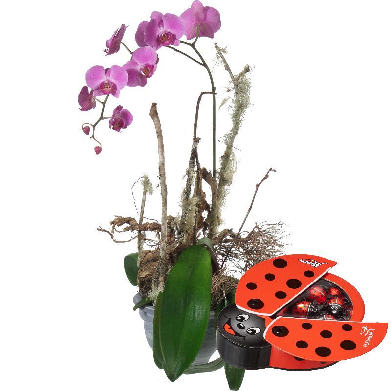 Bouquet de fleurs Good Luck Charm with chocolate ladybird
