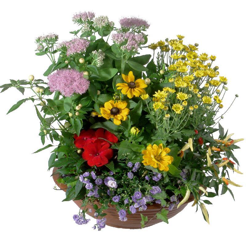 Bouquet de fleurs Outdoor flower bowl (late summer)