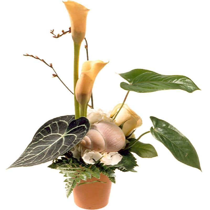 Bouquet de fleurs Exclusive Arrangement