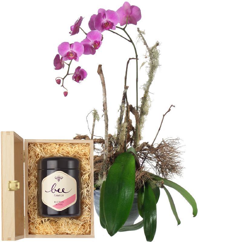 Bouquet de fleurs Noble Orchid (plant) with Swiss blossom honey
