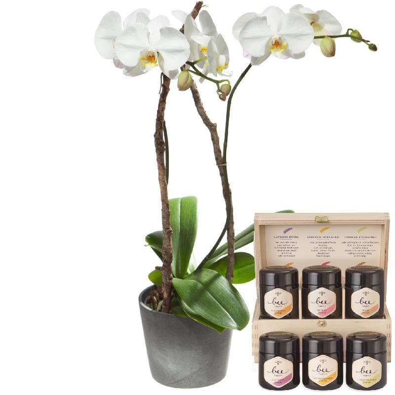 Bouquet de fleurs White Orchid (Phalaenopsis) in cachepot with honey gift set