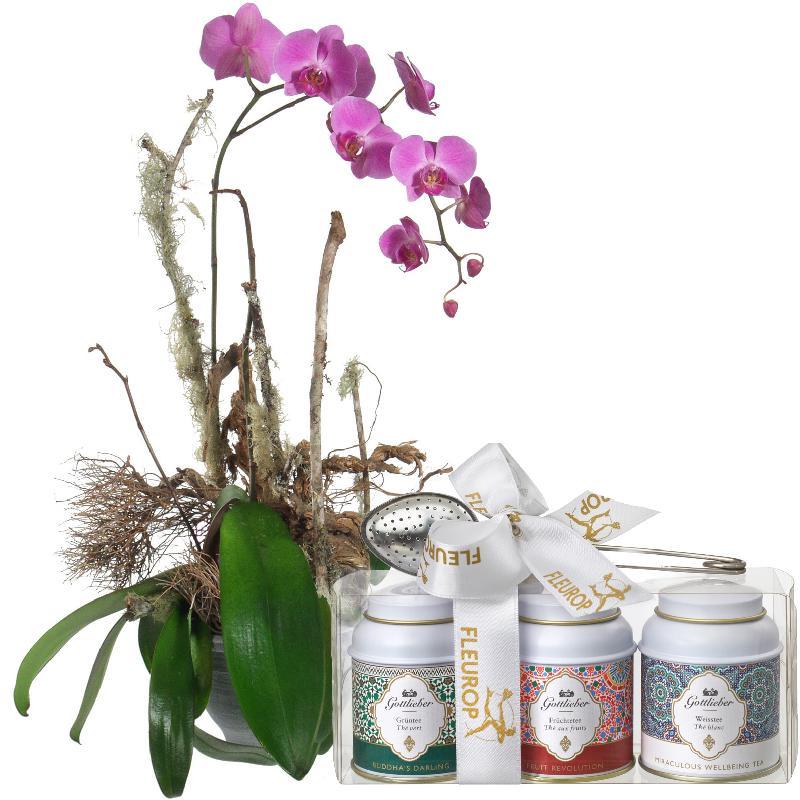 Bouquet de fleurs Noble Orchid (plant) with Gottlieber tea gift set