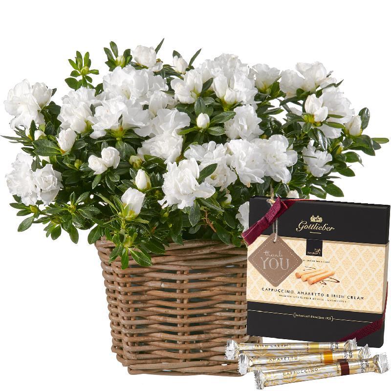 Bouquet de fleurs Azalea (white) with Gottlieber Hüppen and hanging gift tag «