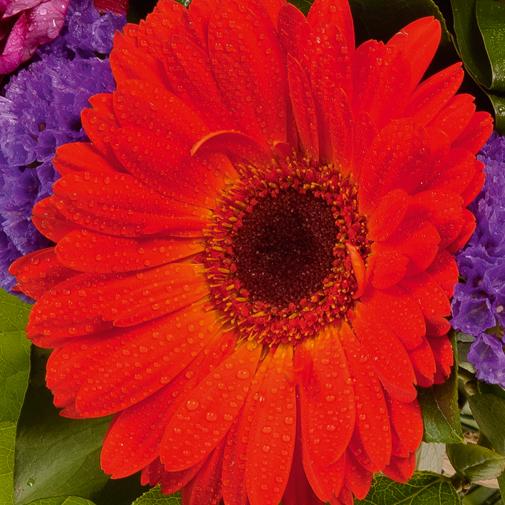 Fleurs deuil Bouquet rond à dominante rouge et violet
