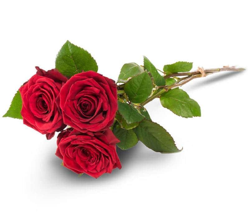 Bouquet de fleurs 3 red roses