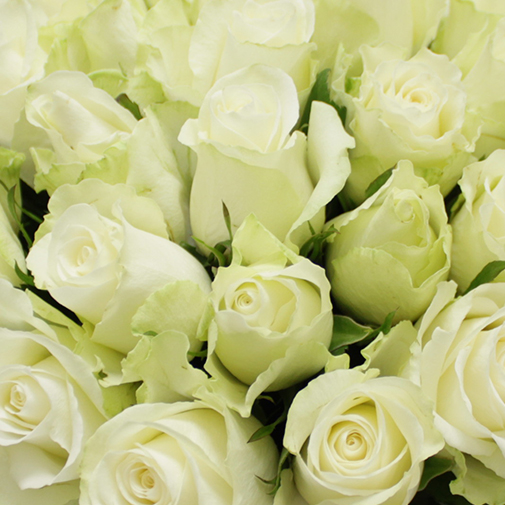 Bouquet de roses Brassée de roses blanches Max Havelaar