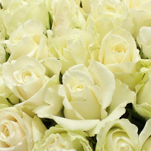 Brass e de roses blanches de 30 50 roses livraison for Fleuriste livreur
