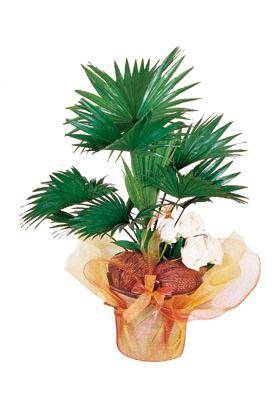 Arrangement of Plant