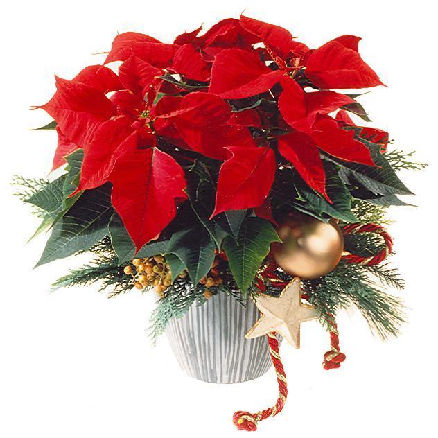 Bouquet de fleurs Red Poinsettia Christmas Style