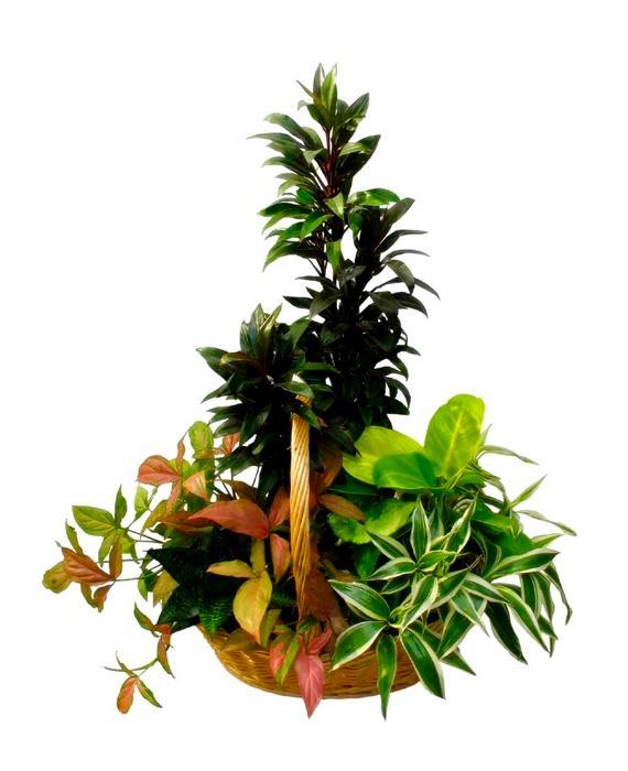 Bouquet de fleurs Green Garden