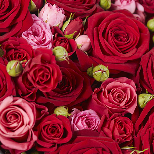 Bouquet de fleurs Cachottière