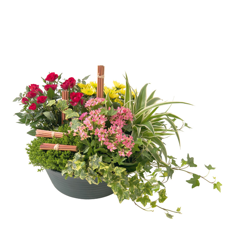 coupe de plantes d 39 ext rieur naturel kalanchoe rose interflora. Black Bedroom Furniture Sets. Home Design Ideas
