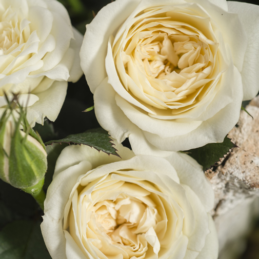 Composition florale Val Thorens