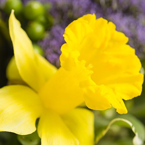 Bouquet de fleurs Colibri