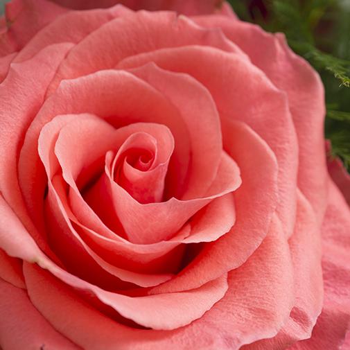 Bouquet de fleurs Mélisse