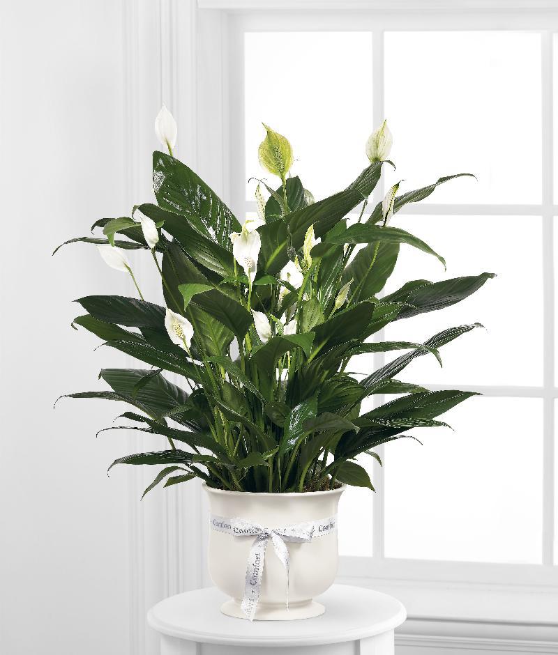 Bouquet de fleurs The FTD Comfort Plan