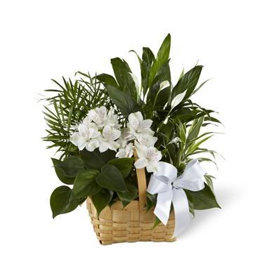 Bouquet de fleurs Peace and Serenity Dishgarden