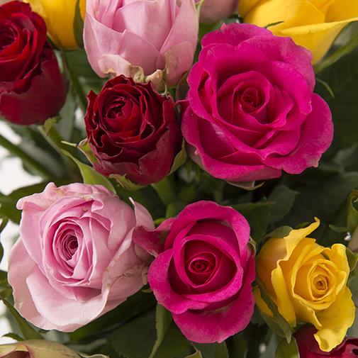 Bouquet de roses Brassée de roses