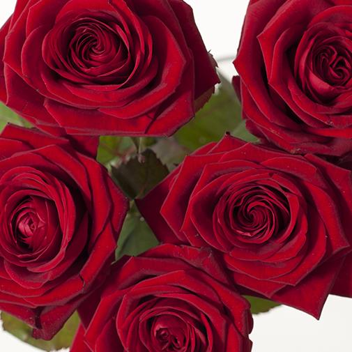 Bouquet de roses Cara