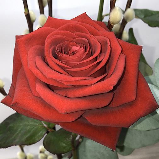 Fleurs et cadeaux Duo d'amour et son écrin de chocolats Interflora
