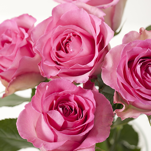 Bouquet de roses Câlin