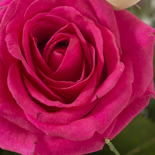 Bouquet de fleurs Esterel et son vase offert