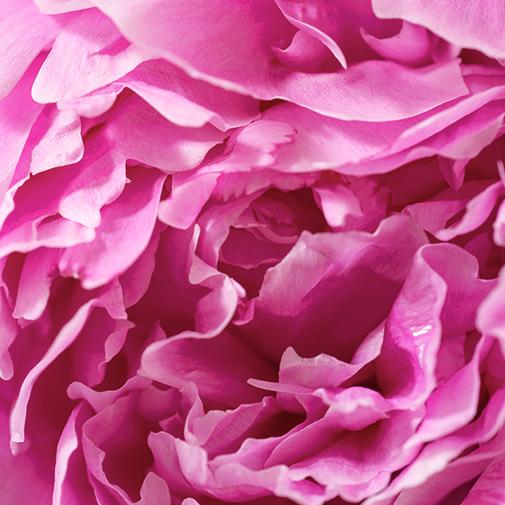 Bouquet de fleurs Instant complice - Bouquet de pivoines et de roses